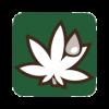 Cannabis en CBD